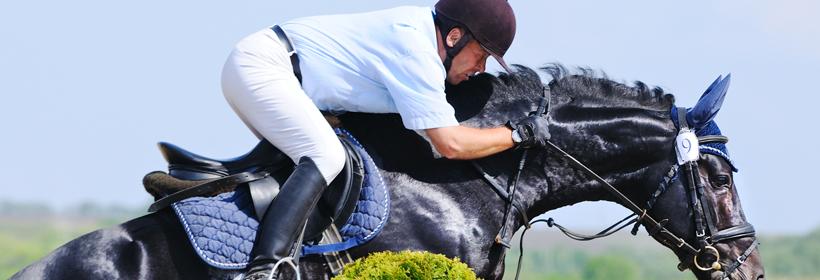 Aldon Horse jumping