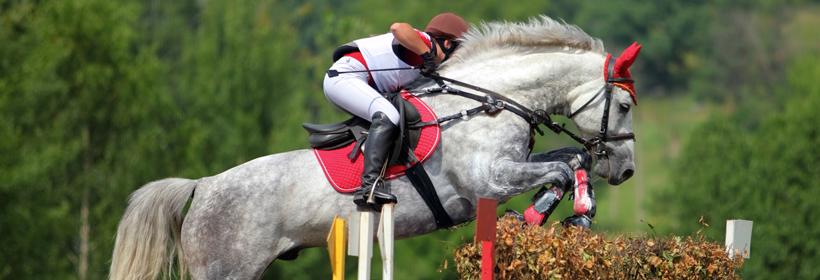 Blenheim show jumping