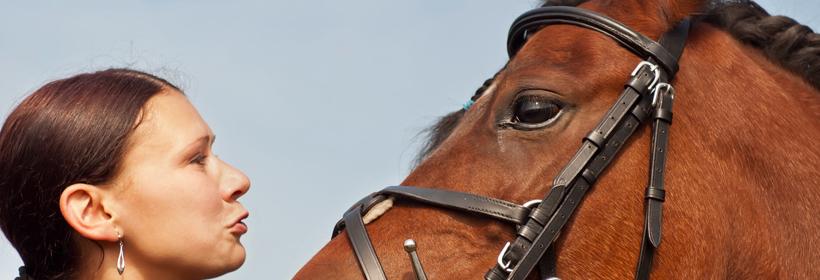 Cholmondeley Castle horse