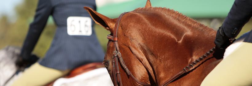 Royal Cheshire Show Horse image