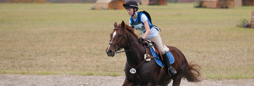 Wellington Horse cross country